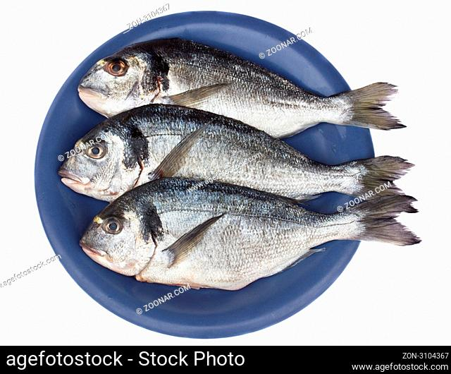 gilt head (dorada) on blue plate isolated on white background