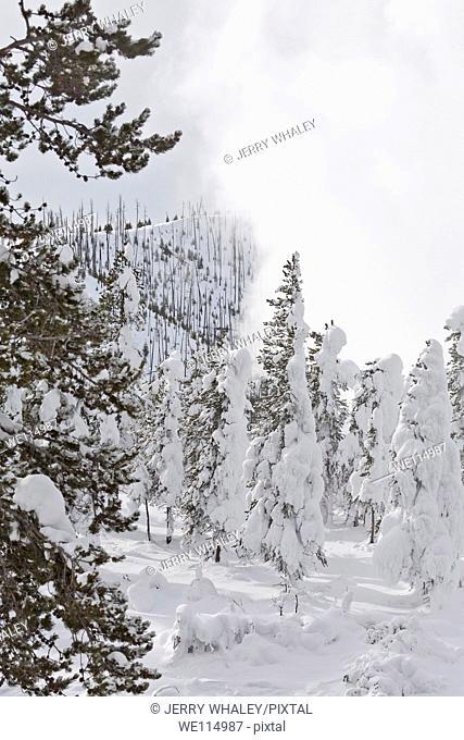 Winter, Snow, Yellowstone NP, WY