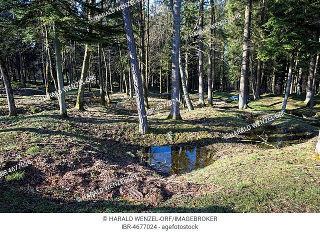 Site of the destroyed village Fleury-devant-Douaumont, grenade funnel overgrown by forest, battlefield of Verdun, First World War, Fleury-devant-Douaumont