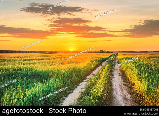 Sunset Sun In Sky Over Rural Countryside Road In Green Wheat Field. Spring Season. Altered Sunrise Sky