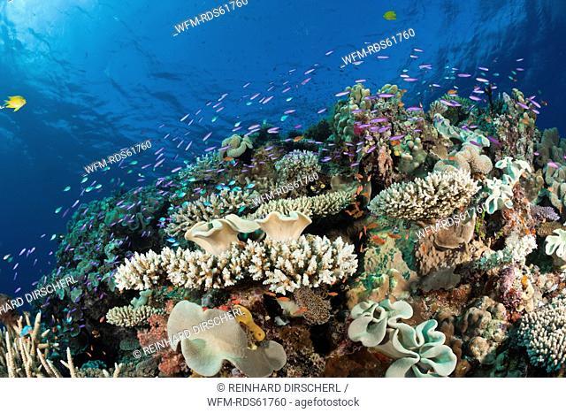 Species-rich Coral Reef, Wakaya, Lomaiviti, Fiji