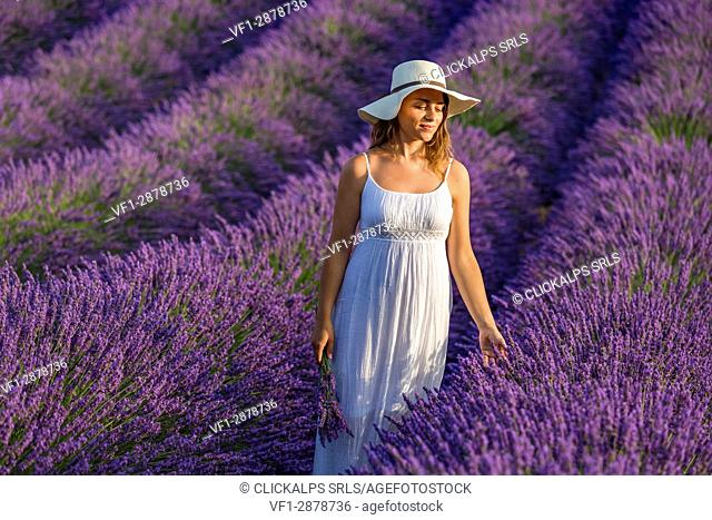 Woman with hat in a lavender field. Plateau de Valensole, Alpes-de-Haute-Provence, Provence-Alpes-Côte d'Azur, France, Europe
