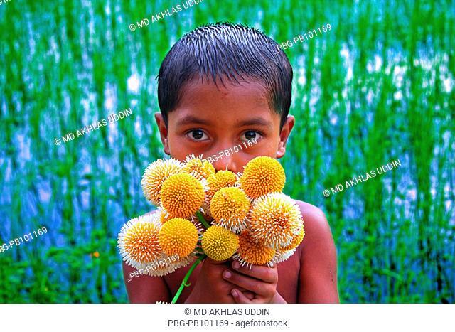 Portrait of a girl holding Kadam flowers It grows on the tree Anthocephalus cadamba tree The blooming of Kadam flowers herald the arrival of rainy season