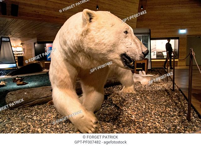 NATURALISTIC POLAR BEAR, MUSEUM OF SVALBARD, CITY OF LONGYEARBYEN, THE NORTHERNMOST CITY ON EARTH, SPITZBERG, SVALBARD, ARCTIC OCEAN, NORWAY