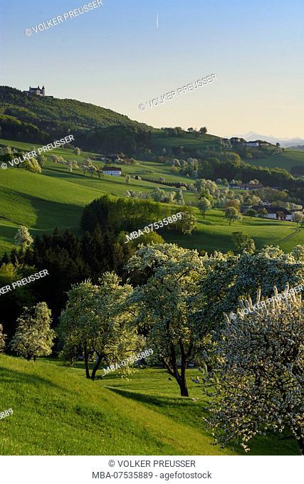 Sonntagberg, view from Allhartsberg to basilica Sonntagberg, blossoming pear trees, hill, meadow, farm houses in Austria, Lower Austria (Niederösterreich)