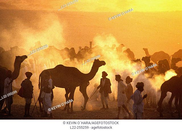 Every year in november, the famous Pushkar Fair comes alive in the joyous festivities, cultural extravaganza and the cattle marketing