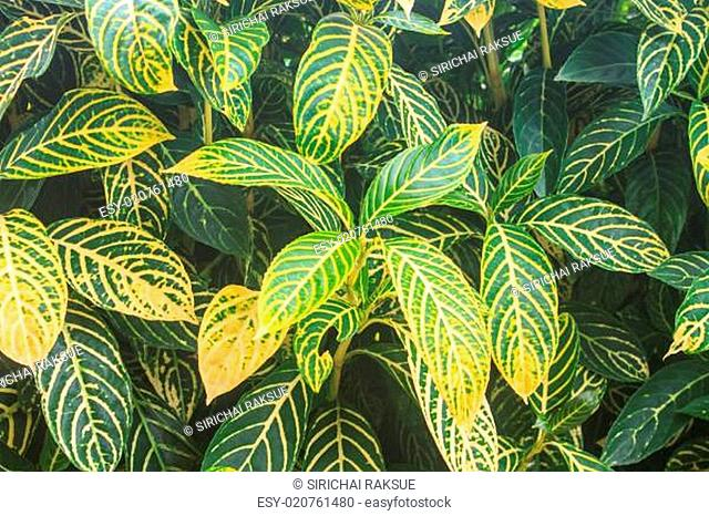 beautiful green leaf background in garden