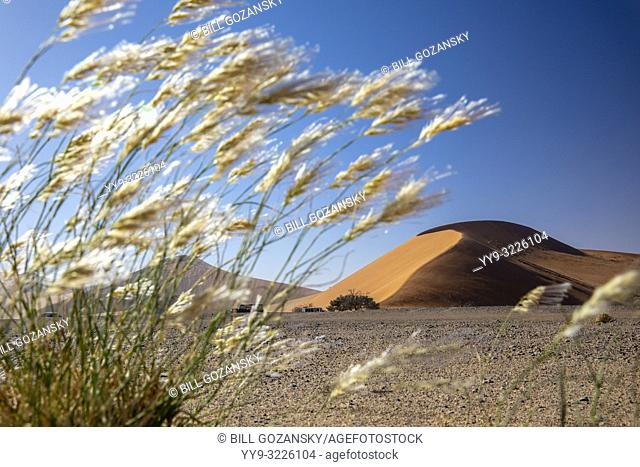 View of Dune 45 through grasses in Namib-Naukluft National Park, Namibia, Africa