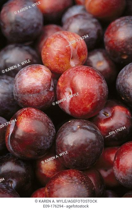 Pile of red-and-purple plums