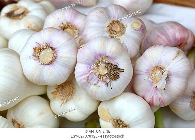 Bunch of fresh white garlic bulbs cloves sale on retail food market stall display, close up, top view, high angle
