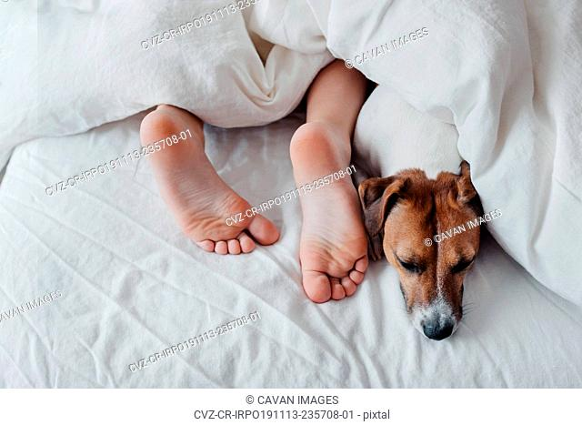 Crop young boy sleeping with dog in bed