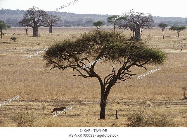 Wildlife, Mammals