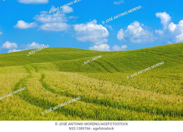 Val d'Orcia, Orcia Valley, Fields, Tuscany Landscape, UNESCO world heritage site, Pienza, Siena Province, Tuscany, Italy