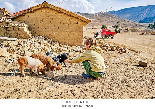 Boy petting piglets, Tarabuco, Chuquisaca, Bolivia, South America
