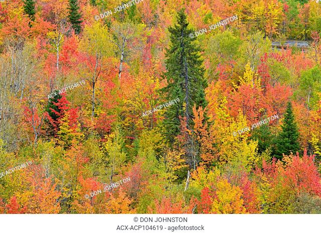 Autumn colour in a mixed forest, Greater Sudbury, Ontario, Canada