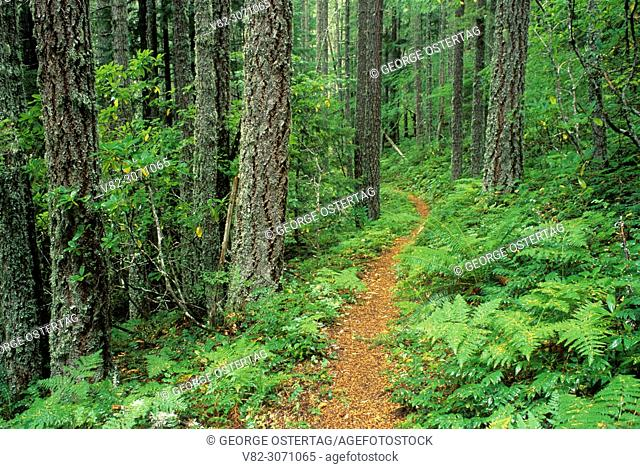 Salmon River Trail, Salmon-Huckleberry Wilderness, Mt Hood National Forest, Oregon