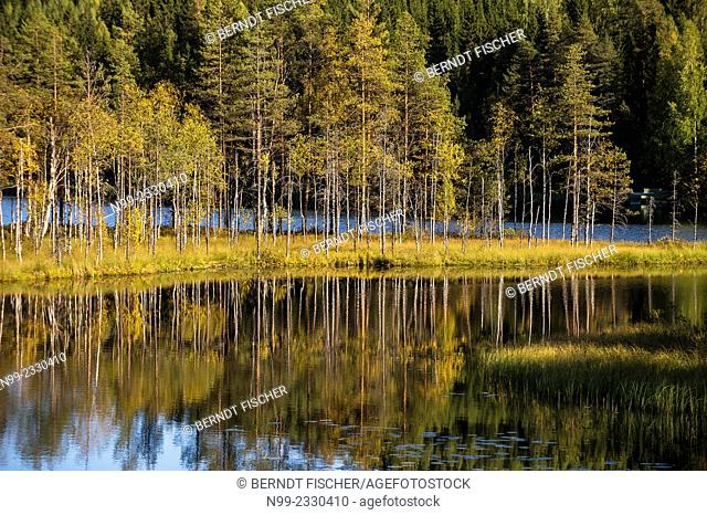 Colours of autumn, lake and reflections of boreal forest with birches, Carelia, Finland