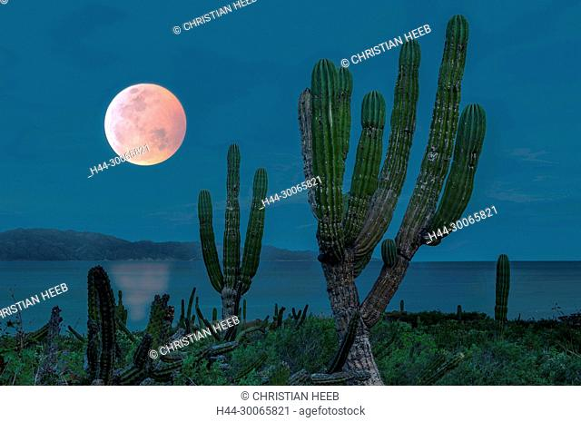 Central America, Mexico, Mexican, Baja California, Sur, El Sargento, Blood moon over Isla Cerralvo (m)