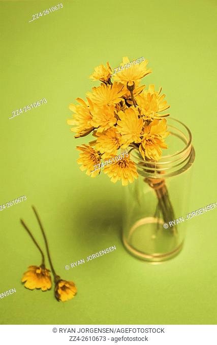 Retro studio photograph on a bunch of small yellow flowers in salt shaker canister. Antique blooms