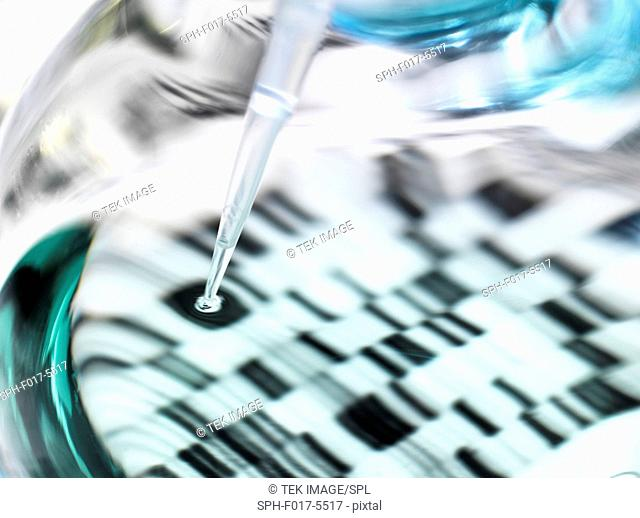 Genetics research. Pipette and flask in front of a DNA (deoxyribonucleic acid) autoradiogram