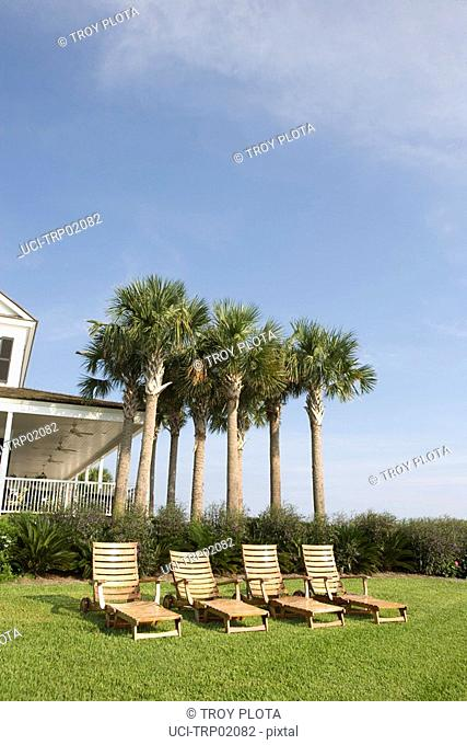 Empty lounge chairs in front of palm trees