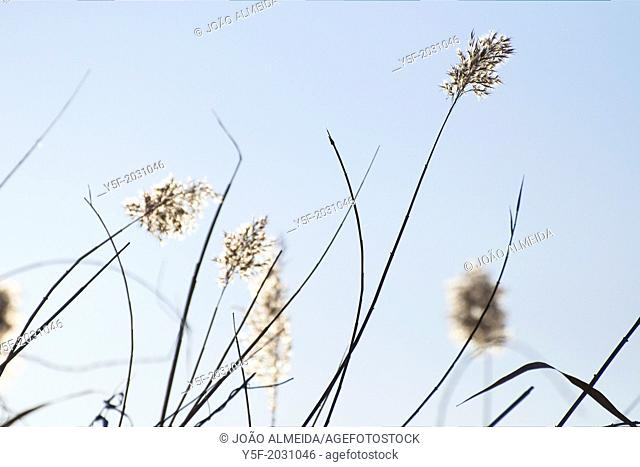 In a late afternoon of February some weeds by the Douro river are lit by soft winter light.	1015