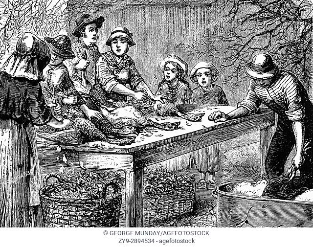 1879: Turkeys are scalded, plucked and plumped in readiness for Thanksgiving Day in a New York kitchen kitchen