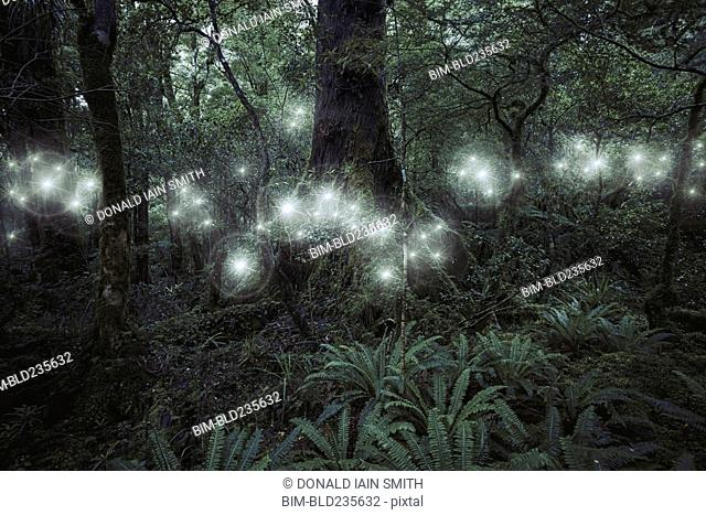 Glowing spheres hovering in forest