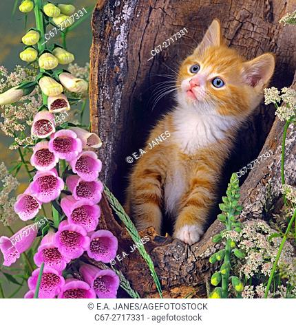 Ginger Kitten playing in hollow tree
