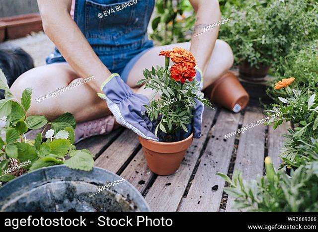 Close-up of mid adult woman planting flower in pot while sitting at garden