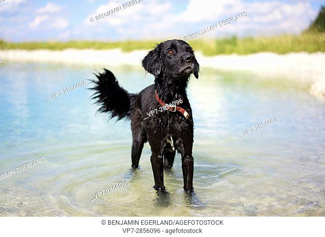 dog standing in lake