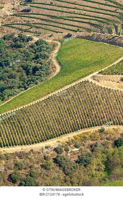 Port Wine vineyards, Alto Douro, Unesco World Heritage site, Tras-os-Montes, Portugal, Europe