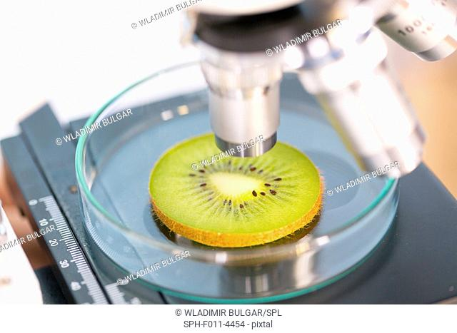 Kiwi fruit being examined under a microscope