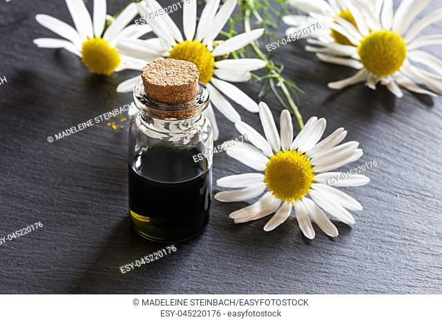 A bottle of dark blue chamomile essential oil with fresh chamomile flowers in the background
