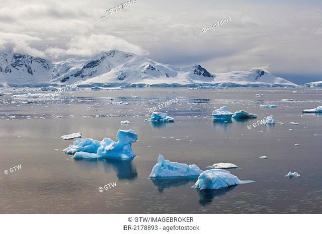Floating ice, Bahia Paraiso, Paradise Bay, Antarctic Peninsula, Antarctica