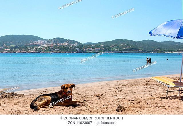 Ein Schäferhund Mischling liegt an einem Strand in Frejus, Südfrankreich 2017