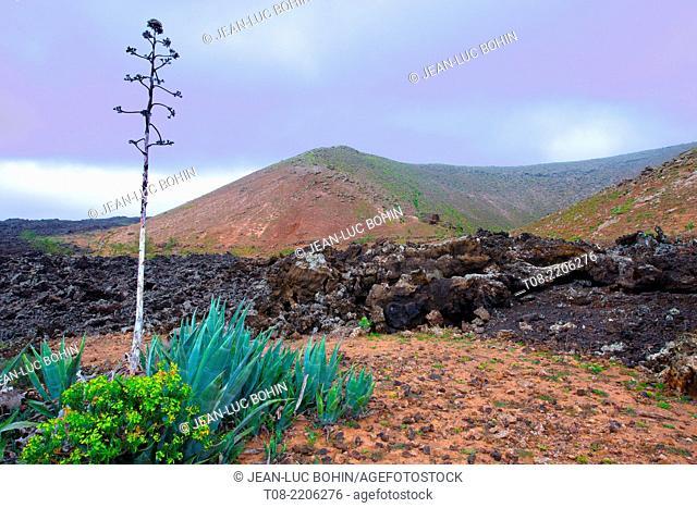 spain,canary islands,lanzarote : montana blanca