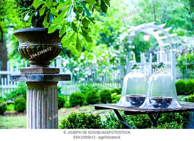 A garden vignette with cloches on a table with a potted boxwood on a pedestal and a picket fence in the background.Georgia USA