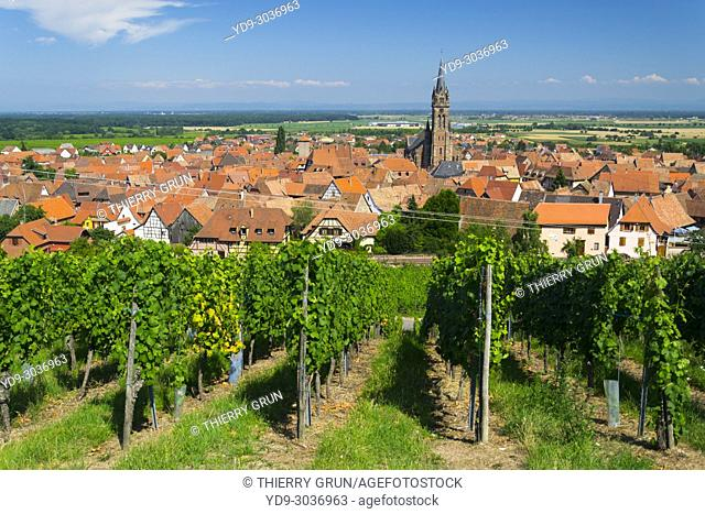 France, Haut-Rhin (68), Wine road, Dambach la ville, vineyards and village during summer
