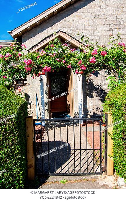 Romantic yard with the gate covered with climbing roses in Scotland