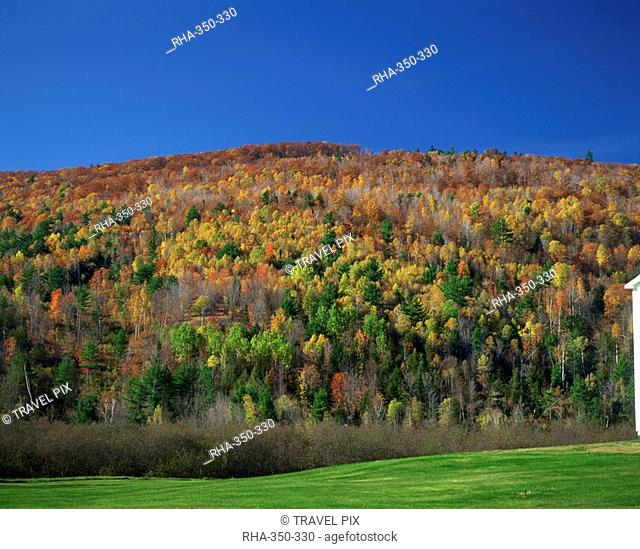 Woodland in fall colours, Vermont, New England, United States of America, North America