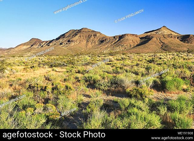 Mojave National Preserve, California, USA