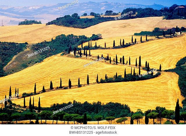 country road winding through hilly field landscape, Italy, Tuscany, La Foce