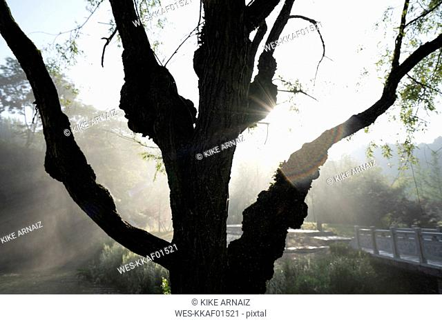 China, Guizhou, Tianhe Pool Park, tree against the sun