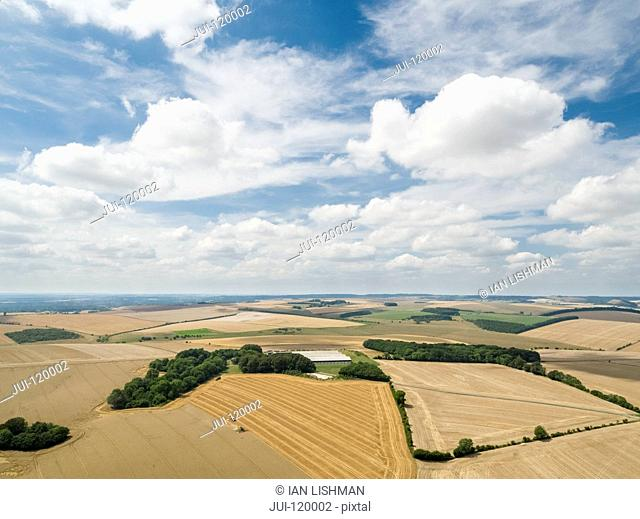 Harvest landscape aerial of combine harvester cutting summer wheat field crop with tractor trailer under blue sky on farm