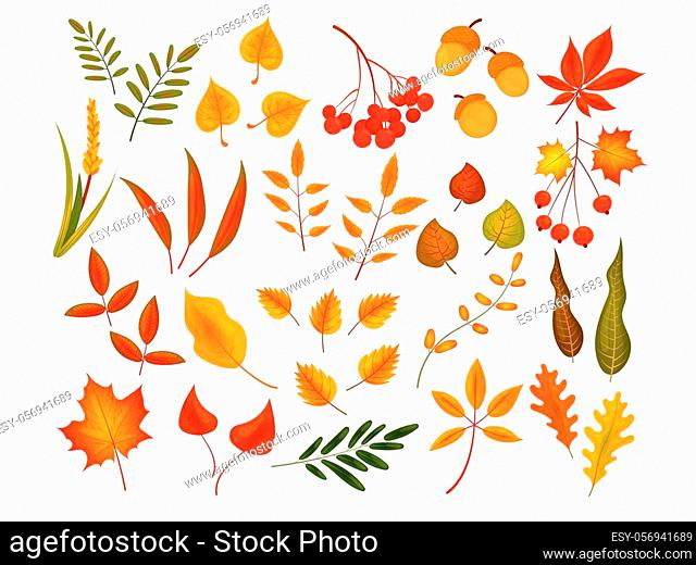 Big set of cute leaves from different kind of trees isolated. Set of colorful autumn leaves and berries. Realistic cartoon style. Vector illustration