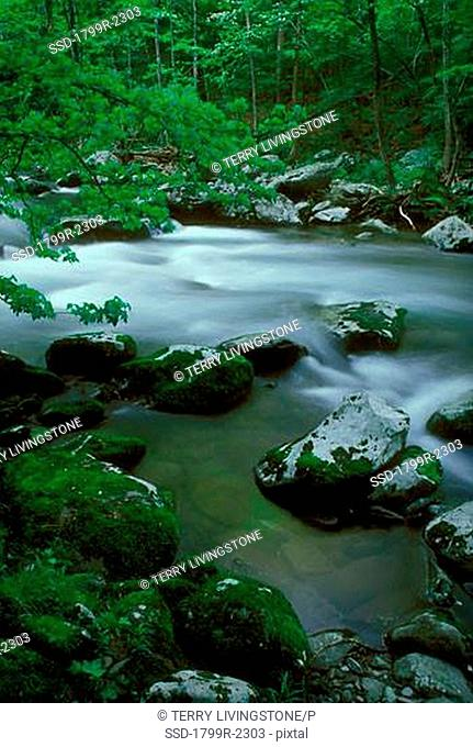 Stream flowing through a forest, Great Smoky Mountains National Park, Tennessee, USA