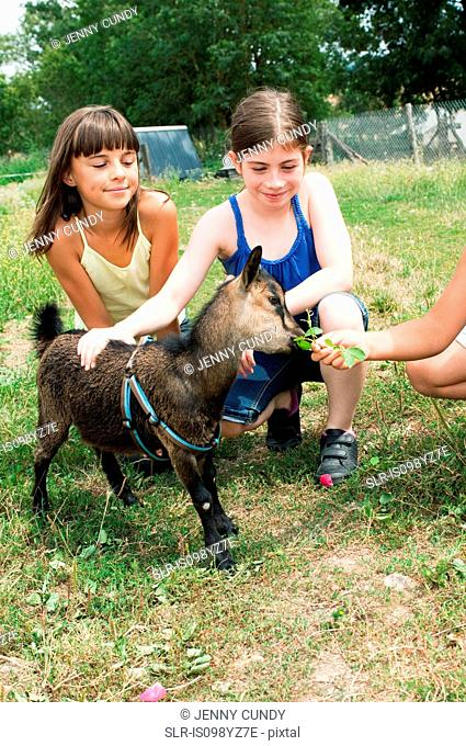 Girls feeding goat kid in field