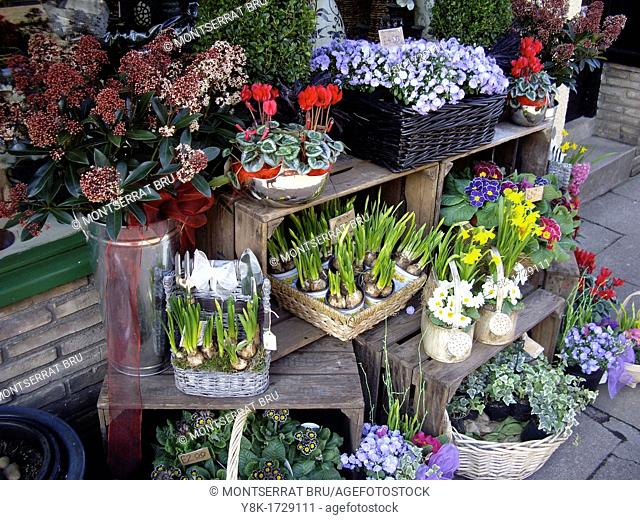 Flower shop with early spring display in Bury St Edmunds, Suffolk, UK