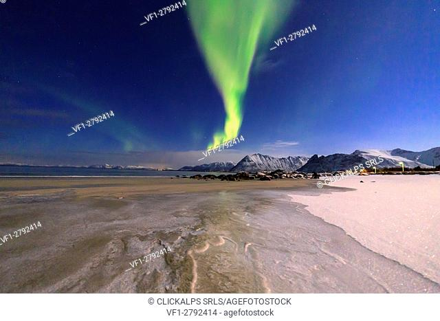 The aurora borealis lights up the sky and the beach of the cold sea of Gymsøyand. Lofoten Islands Northern Norway Europe